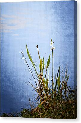 Riverbank Beauty Canvas Print by Carolyn Marshall