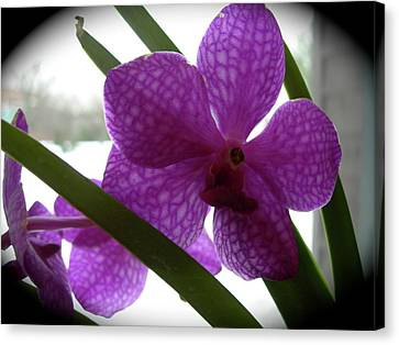 Riverfront Gallery Orchid Canvas Print by Randy Rosenberger