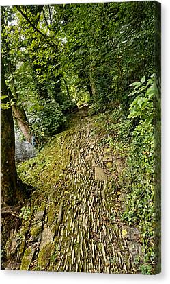 Riverside Walk Canvas Print by Nichola Denny