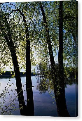Riverview Through Budding Trees Canvas Print by Panoramic Images