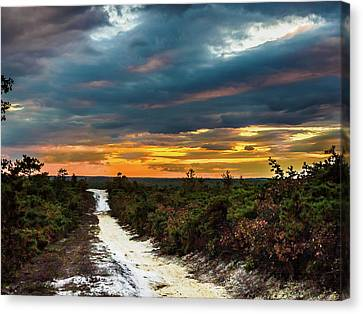 Road Into The Pinelands Canvas Print by Louis Dallara
