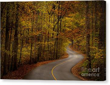 Road Through Tishomingo State Park Canvas Print by T Lowry Wilson