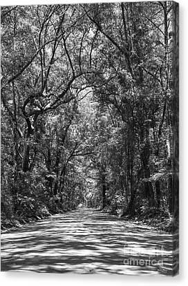Road To Angel Oak Grayscale Canvas Print by Jennifer White