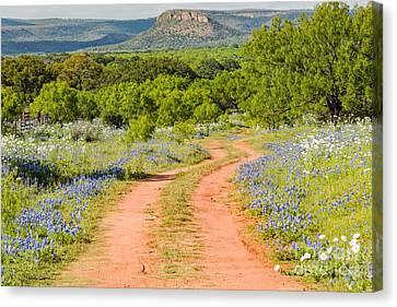 Road To Bluebonnet Heaven - Willow City Loop Texas Hill Country Llano Fredericksburg Canvas Print