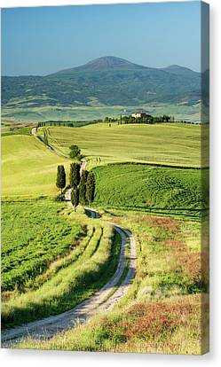 Road To Terrapille - Vertical Canvas Print by Michael Blanchette