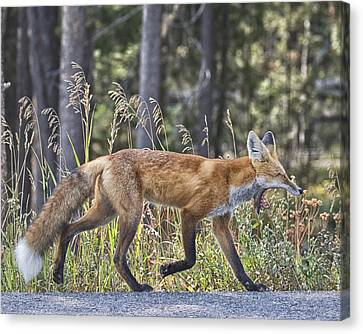 Road Weary Canvas Print