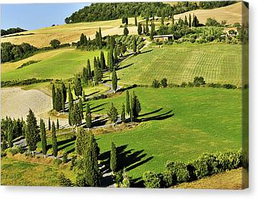 Road With Cypresses Canvas Print by Juergen Feuerer