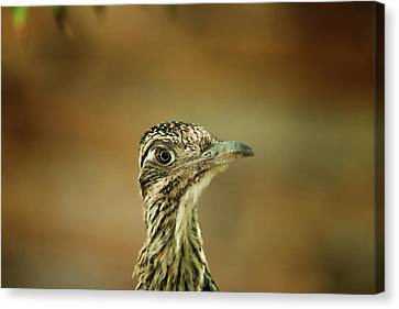 Roadrunner 3642 Canvas Print by Tam Ryan