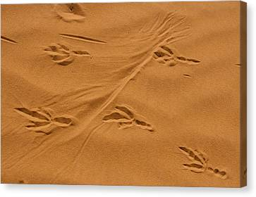Roadrunner Tracks In The Sand Canvas Print by Michael Melford