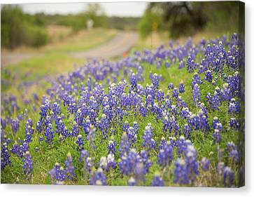 Roadside Attraction Canvas Print by Aaron Bedell