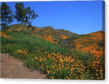 Canvas Print featuring the photograph Roadside Color by Cliff Wassmann