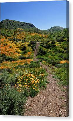 Canvas Print featuring the photograph Roadside Flowers by Cliff Wassmann