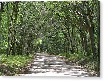 Canvas Print featuring the photograph Roadway To Mitchellville Beach by Carol  Bradley