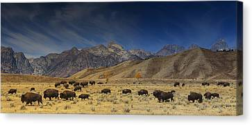 Roaming Bison Canvas Print