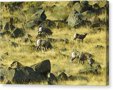 Canvas Print featuring the photograph Roaming Free by Dale Stillman