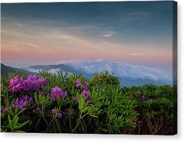 Roan Mountain Morning Canvas Print
