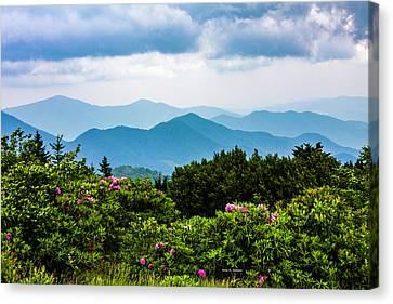 Roan Mountain Rhodos Canvas Print by Dale R Carlson