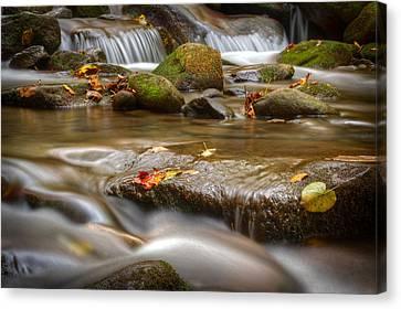 Roaring Fork Stream Great Smoky Mountains Canvas Print by Steve Gadomski