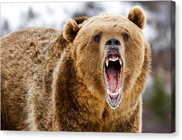 Roaring Grizzly Bear Canvas Print