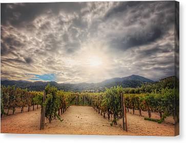 Winery Vineyard - Napa Valley California Canvas Print by Jennifer Rondinelli Reilly - Fine Art Photography