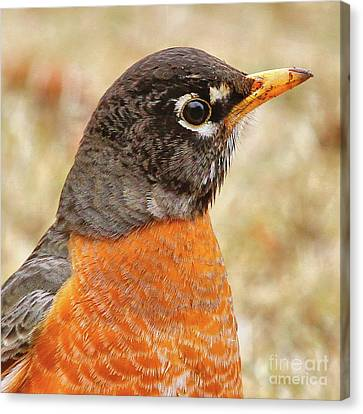 Canvas Print featuring the photograph Robin by Debbie Stahre