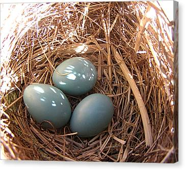 Canvas Print featuring the photograph Robin Eggs by Angie Rea