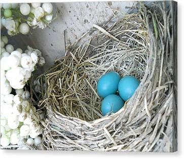 Robin Eggs In A Wreath Canvas Print by Marqueta Graham