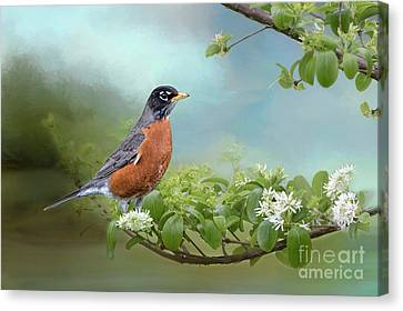 Canvas Print featuring the photograph Robin In Chinese Fringe Tree by Bonnie Barry