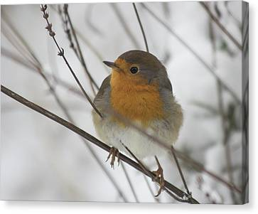 Robin In The Snow Canvas Print