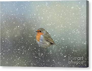 Robin In Winter Canvas Print by Eva Lechner
