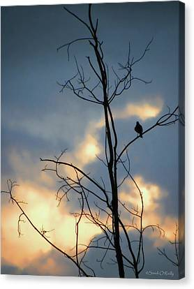 Canvas Print featuring the photograph Robin Watching Sunset After The Storm by Sandi OReilly