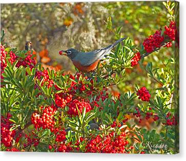 Canvas Print featuring the photograph Robins Berry Feast by K L Kingston