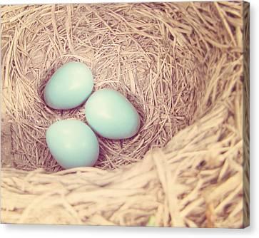 Robin's Eggs Canvas Print by Amy Tyler