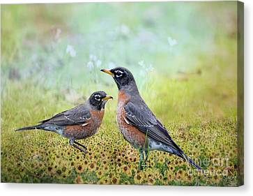 Robins, Heralds Of Spring Canvas Print by Bonnie Barry