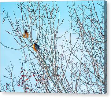 Robins In A Tree Spring Scene Canvas Print by Cheryl Baxter