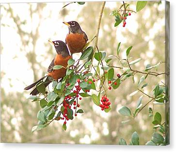 Canvas Print featuring the photograph Robins In Holly by Peg Urban