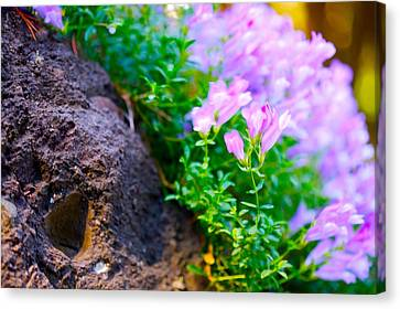 Rock And Flowers Canvas Print by Paul Kloschinsky
