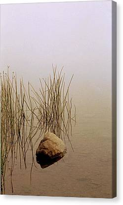Rock And Reeds On Foggy Morning Canvas Print