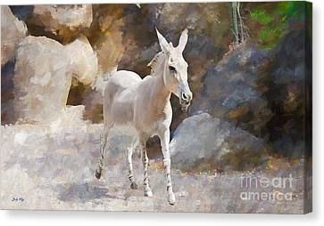 Rock And Romp Canvas Print by Judy Kay
