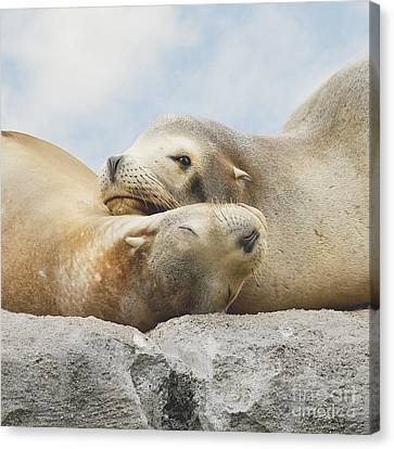 Canvas Print featuring the photograph Rock Buddies by Roy  McPeak