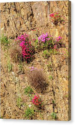 Rock Cutting 1 Canvas Print by Werner Padarin