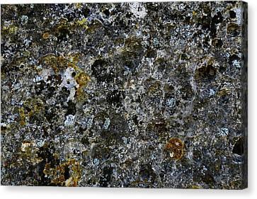 Rock Lichen Surface Canvas Print