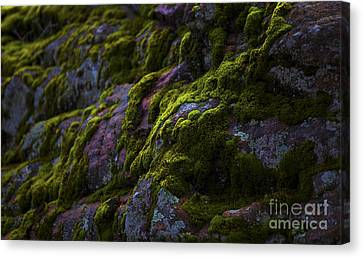 Rock With Green  Canvas Print by Barbara Schultheis