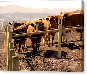 Rockies Cattle Country Canvas Print by Al Bourassa