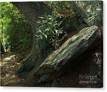 Rocks And Rhododendron At Chimney Rock Canvas Print