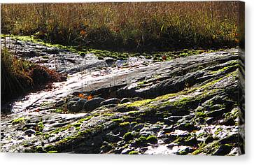 Rocks Moss And Grass 2  Canvas Print by Lyle Crump