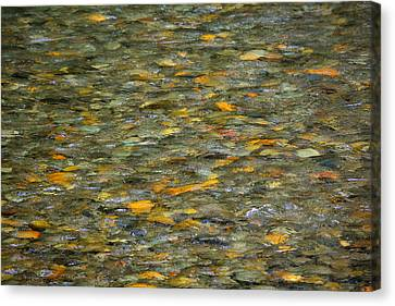 Rocks Under Water Canvas Print