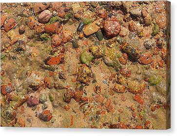 Rocky Beach 5 Canvas Print