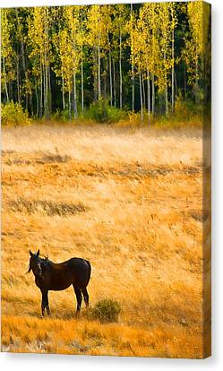 Rocky Mountain Autumn Graze Canvas Print by James BO  Insogna