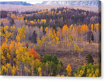 Rocky Mountain Autumn View Canvas Print by James BO  Insogna